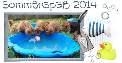 Sommerspass 2014